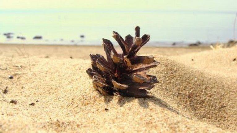 «Изумрудный»: Золотой пляж — излюбленное место отдыха горожан и гостей Зеленогорска (от ЖК 20 минут медленным шагом)