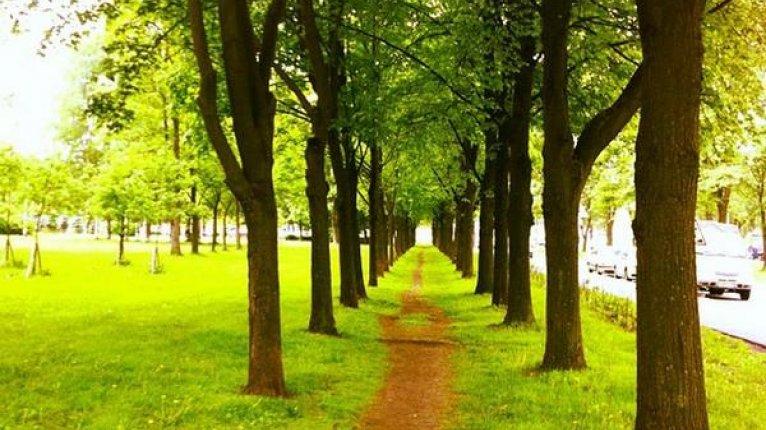 «Город Мастеров»: Можно прогуляться до Любашинского парка, путь займет 25 минут пешком
