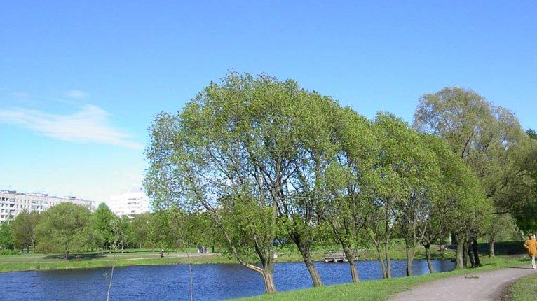 «Просвещения, 85»: Муринский парк
