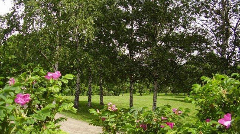 «Молодежный»: В 15 минутах ходьбы от дома находится сад «Куракина Дача»